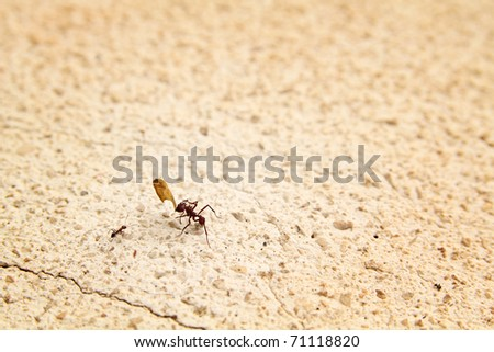 Ant holding a little part of a leaves and a little ant having a discussion - stock photo