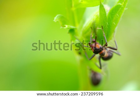 Ant in the grass on green leaf - stock photo