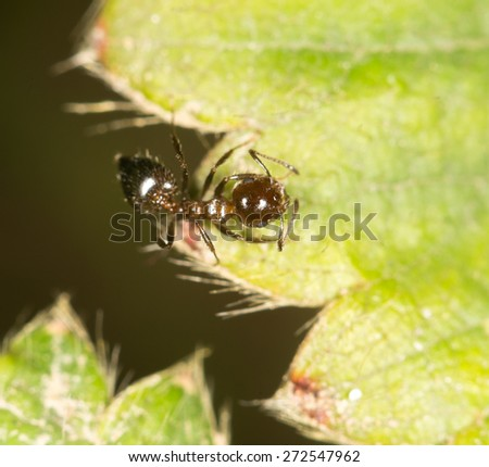 ant on green leaf in nature. close-up - stock photo
