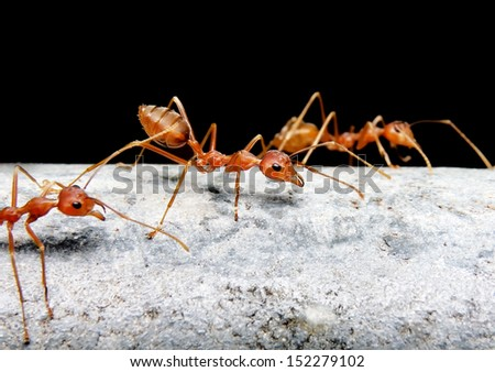 Ant on the old pipe - stock photo