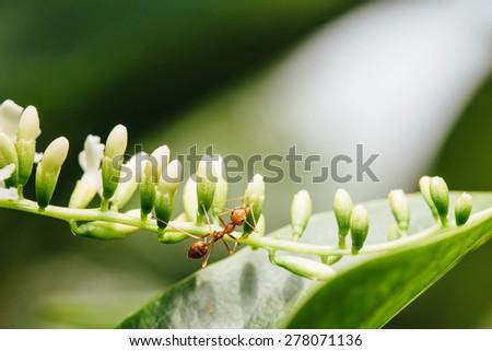 ant on the tree - stock photo