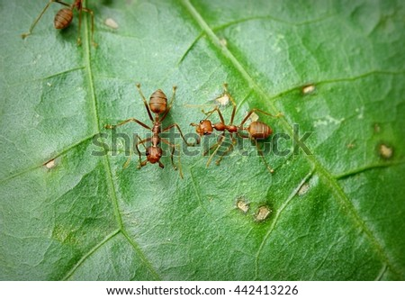 Ant / Red ant - stock photo