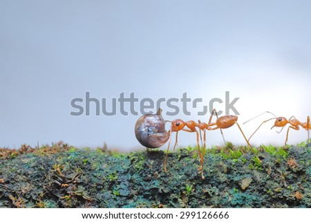 Ant walking  - stock photo