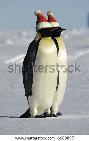 Antarctic penguin couple celebrates Christmas - stock photo