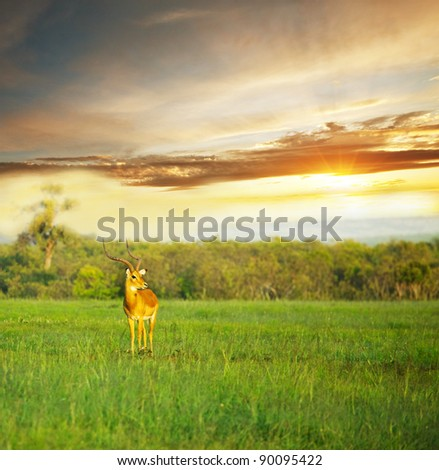 antelope Gemsbok - stock photo