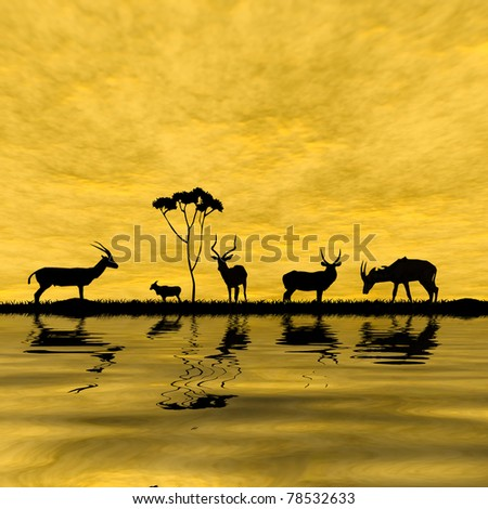 antelope in sunset - stock photo