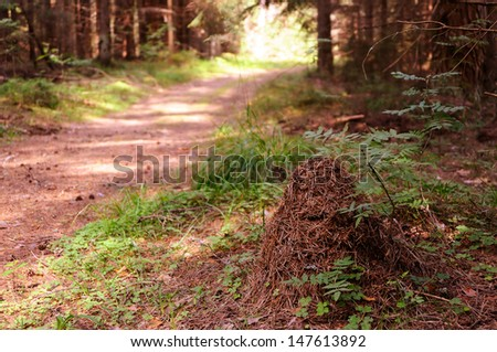 Anthill near the forest path - stock photo