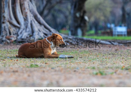 Anticipation and hope of the dog . - stock photo