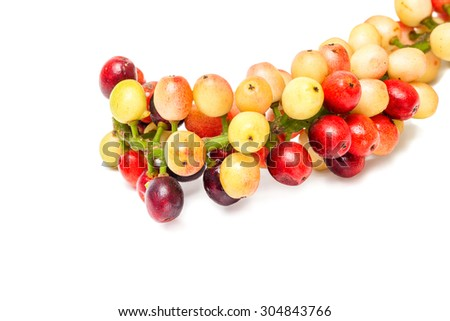 Antidesma velutinosum Blume Fruit isolated on white background
