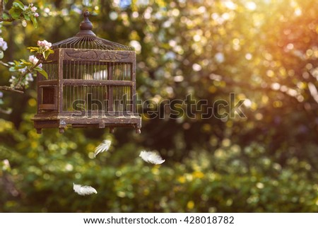 Antique Edwardian birdcage in blossom with floating feathers - stock photo