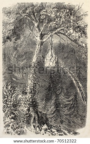 Antique illustration of Quetzal in the nest. Original, from drawing of De Pontelli, was published on L'Illustration, Journal Universel, Paris, 1860 - stock photo