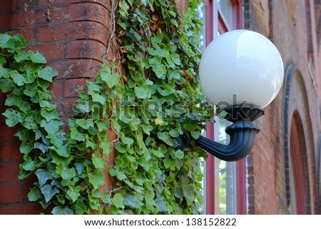 Antique Lamppost on a old town historic brick building covered with fresh spring ivy - stock photo