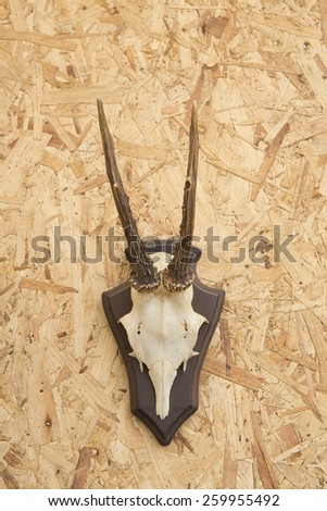antler horn decoration mounted on wall - stock photo