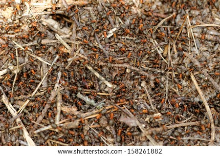 ants and ant hill - stock photo