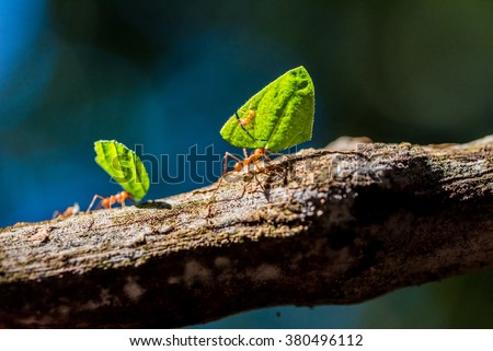 Ants are carrying on leaves - stock photo