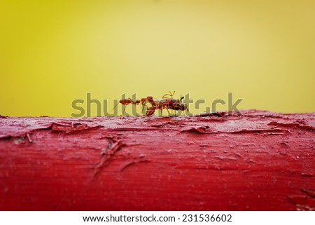 Ants are eating the bait.  - stock photo