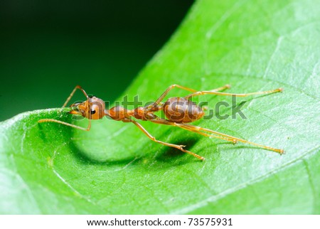 Ants at work - stock photo