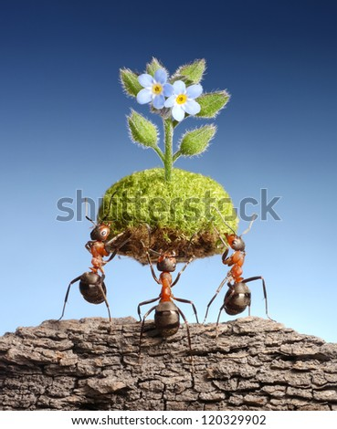 ants bring piece of living nature at empty rock. Federal ant programs in some countries help forests to survive, with a little help from small friends - stock photo