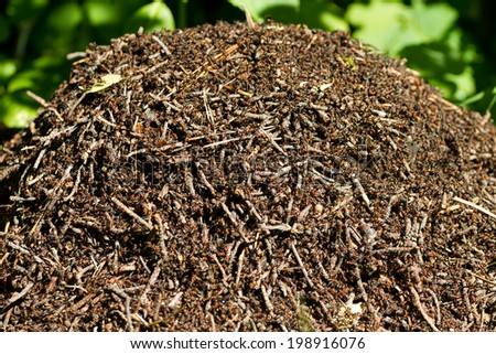 Ants colony working on the ant hill - stock photo