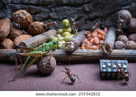 ants develop grasshopper to work , ant tales                                - stock photo