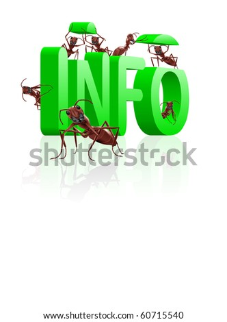 ants gathering info or information learn and educate knowledge
