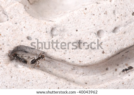 Ants in the house. I love 'em really. - stock photo