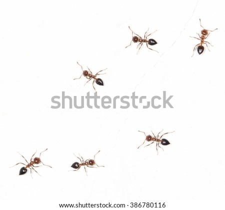 ants on a white wall - stock photo