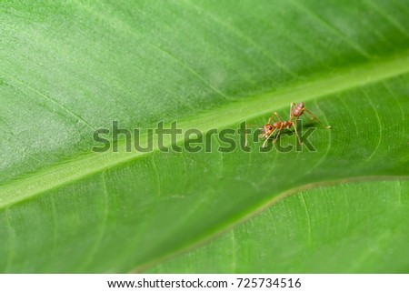 Ants on leaves