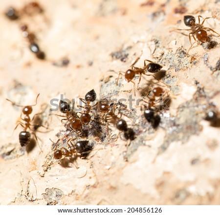 ants on the wall. macro - stock photo