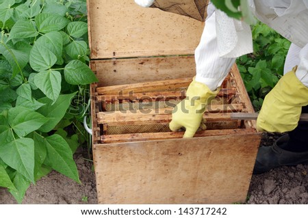 apiarist and box with honeycombs - stock photo