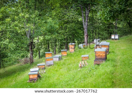 Apiary with several man-made beehives in the Pyrenees - stock photo