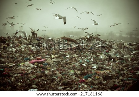 Apocalyptic scene of birds flying over the dump , retro style artistic toned photo