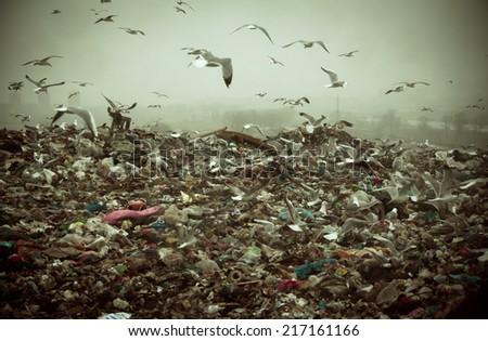 Apocalyptic scene of birds flying over the dump , retro style artistic toned photo - stock photo