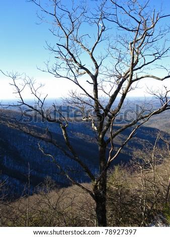 Appalachian Trail in Georgia - stock photo