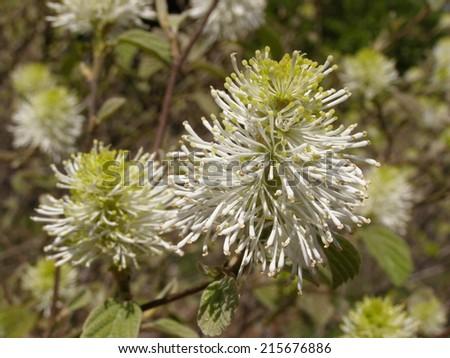 Appalachian wildflowers, Tennessee - stock photo