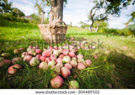 Apple basket with blur effect - stock photo