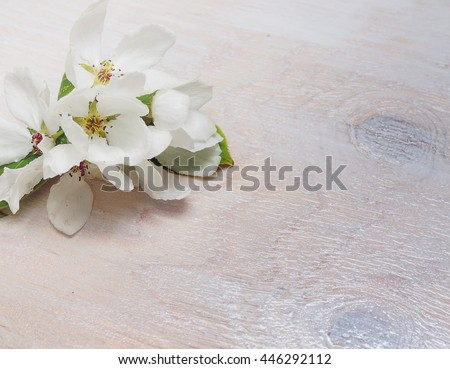 Apple blossom on the white wooden background