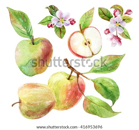 Apple branches with blossom, leaves and fruits set. Watercolor apple fruit and apple bloom isolated on white background. Summer harvest. Fruit on branch with leaves collection. Hand drawn illustration - stock photo