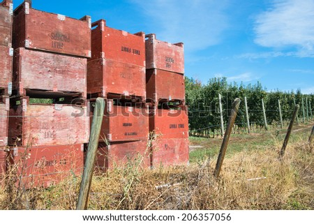 Apple Crates  stacked in front of Apple Orchard.  Copy space. - stock photo