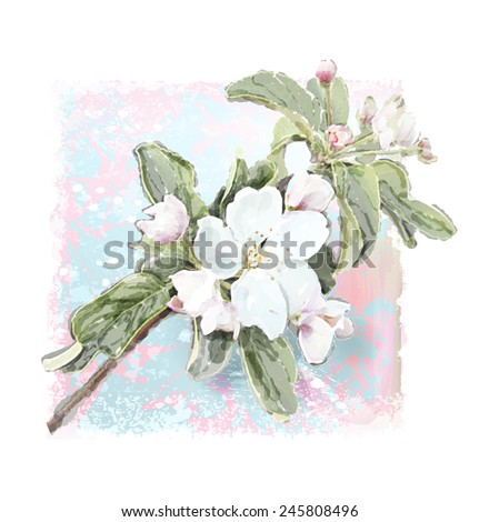 Apple flower blossoms in full bloom   - stock photo