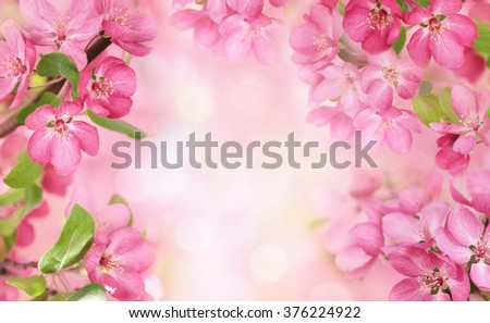Apple flowers,Spring blossom with copy space. - stock photo
