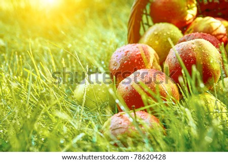 apple in garden - stock photo