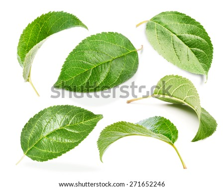 Apple leaves set isolated on white
