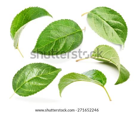 Apple leaves set isolated on white - stock photo