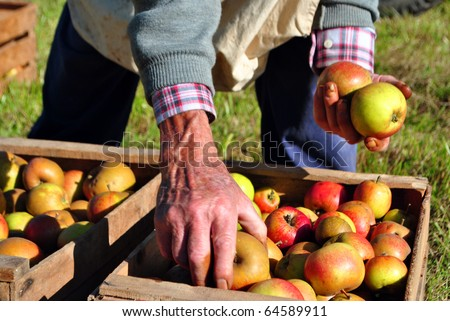 apple on tree and hand showing healthy food concept