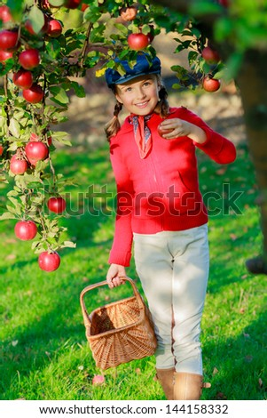 Apple orchard - Young girl picking red apples into the basket - stock photo