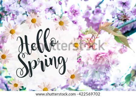 Apple tree blossom at springtime with the words hello spring / Spring - stock photo