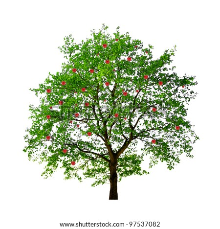 apple tree isolated on white background - stock photo
