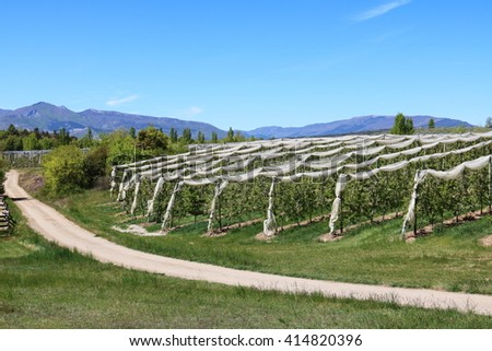 Apple Tree Orchard in Southern France - stock photo