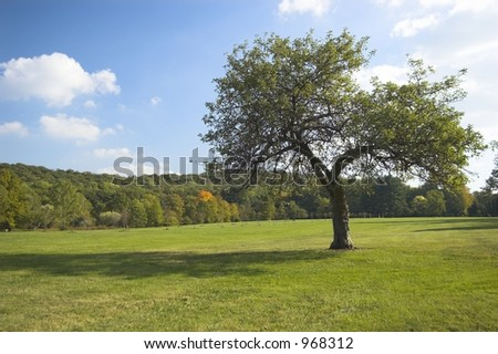 Apple tree with blue skies - stock photo